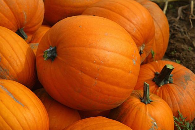 Augusta Area Halloween Events